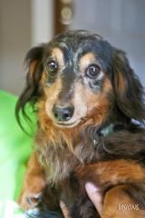 Doxie 2