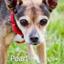 pearl1