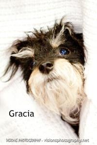 Gracia1