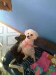 Millie 3