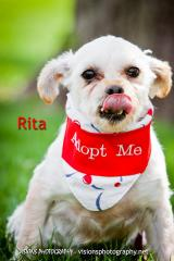 Rita 2