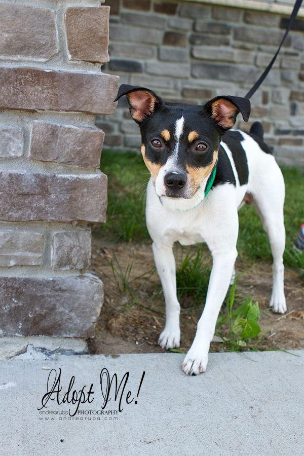 dog of the week oliver last hope animal rescue