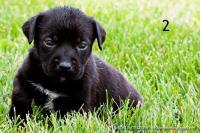 Pit Puppy 2