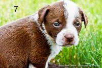 Pit Puppy 7