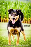 Tasha 2