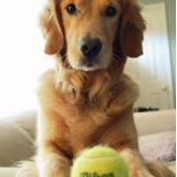 golden-tennis-ball-blog