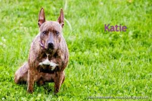 Katie 2