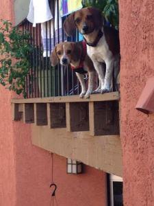 Charlie & Lola 3