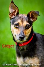 Gidget 2