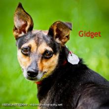 Gidget 3