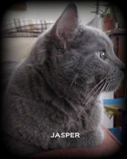 Jasper 2