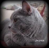 Jasper 3