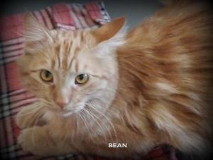 Bean 2